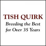 TISH QUIRK LLC