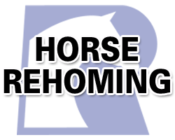 DOES YOUR HORSE NEED A SEMI-RETIRED JOB?